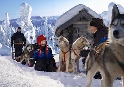 Dog sledding in Rovaniemi Lapalnd