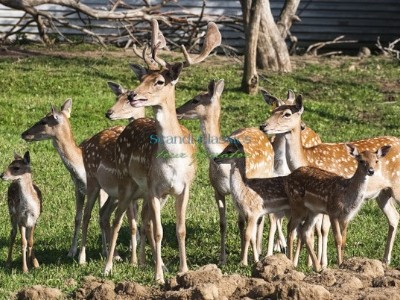Riverboat cruise to a reindeer farm