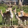 Lapland summer safaris