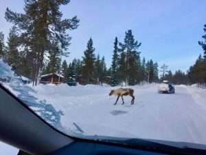 Lapland by winter