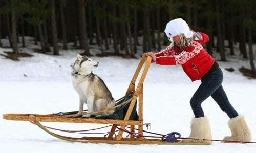 Husky safari in Finland