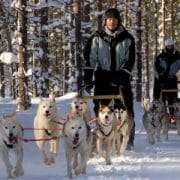 Husky safari in Lapland Finland