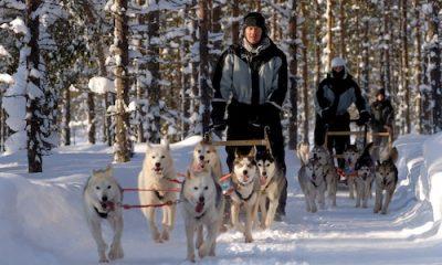 Husky safari in Lapland Finland
