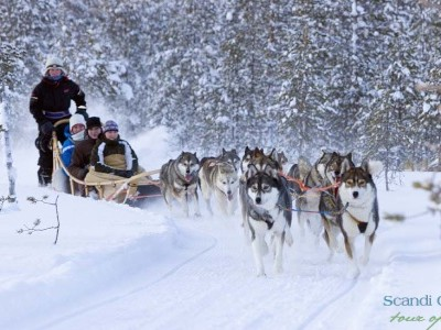 Enjoy husky safari in Lapland