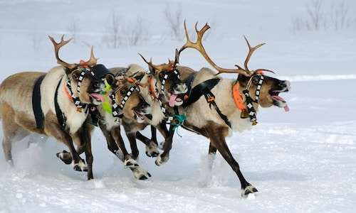 Lapland Reindeer Sleigh Ride to Santa Claus Village from Rovaniemi ...