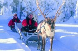 Lapland safari | Reindeer ride