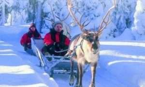 Lapland safari   Reindeer ride