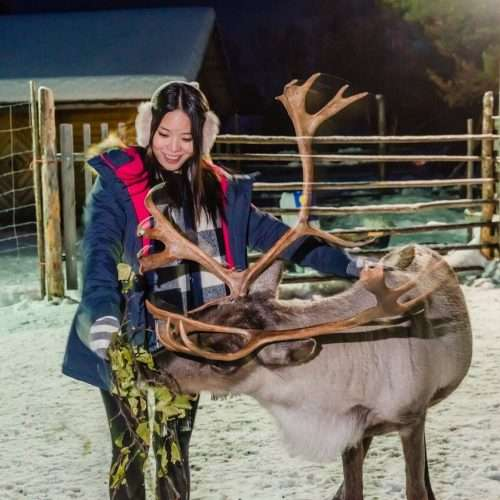Visit reindeer farm in Inari and see northern lights after the safari