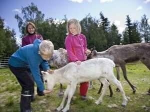 Reindeer farm in Rovaniemi