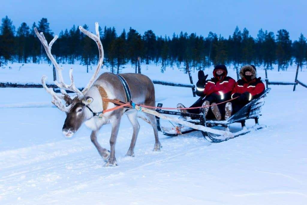 Rovaniemi Reindeer Trip