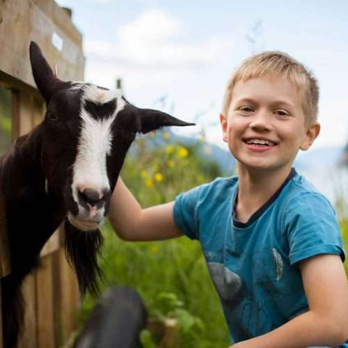 Tour to the goat's cheese farm
