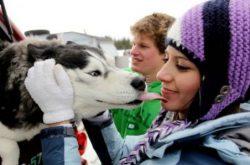 Husky is a friendly dog